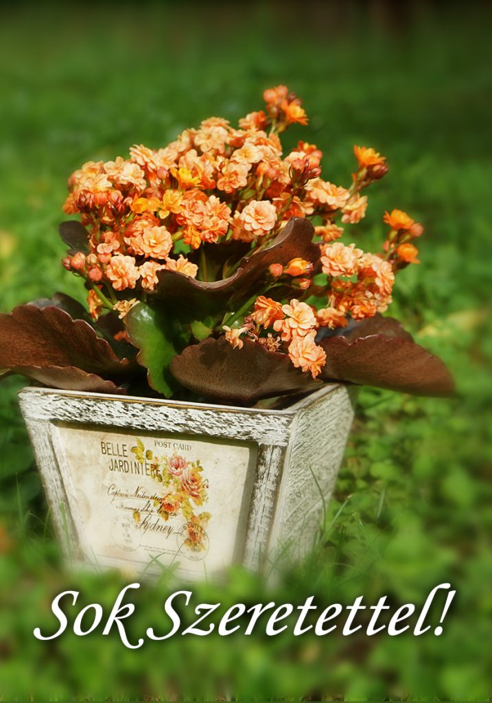 Therapy Massage virágos ajándékkártya
